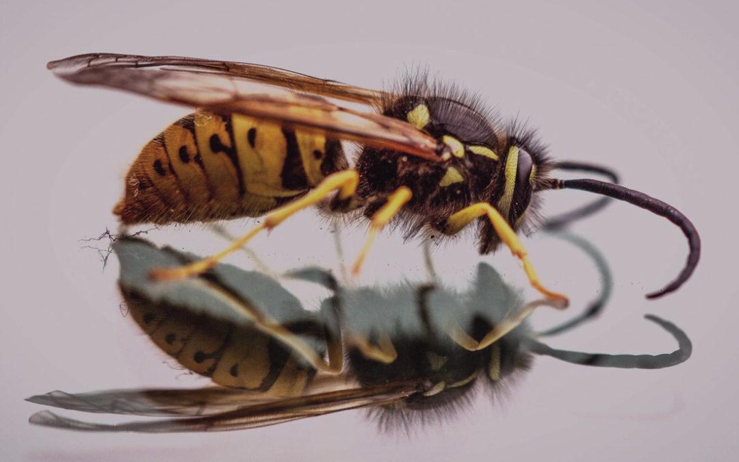 Hilfe bei Insektenstichen