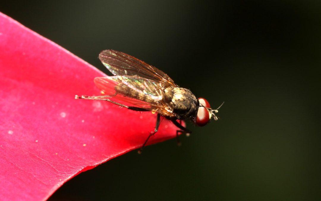 Warum schlagen Mücken Ecken beim Fliegen?